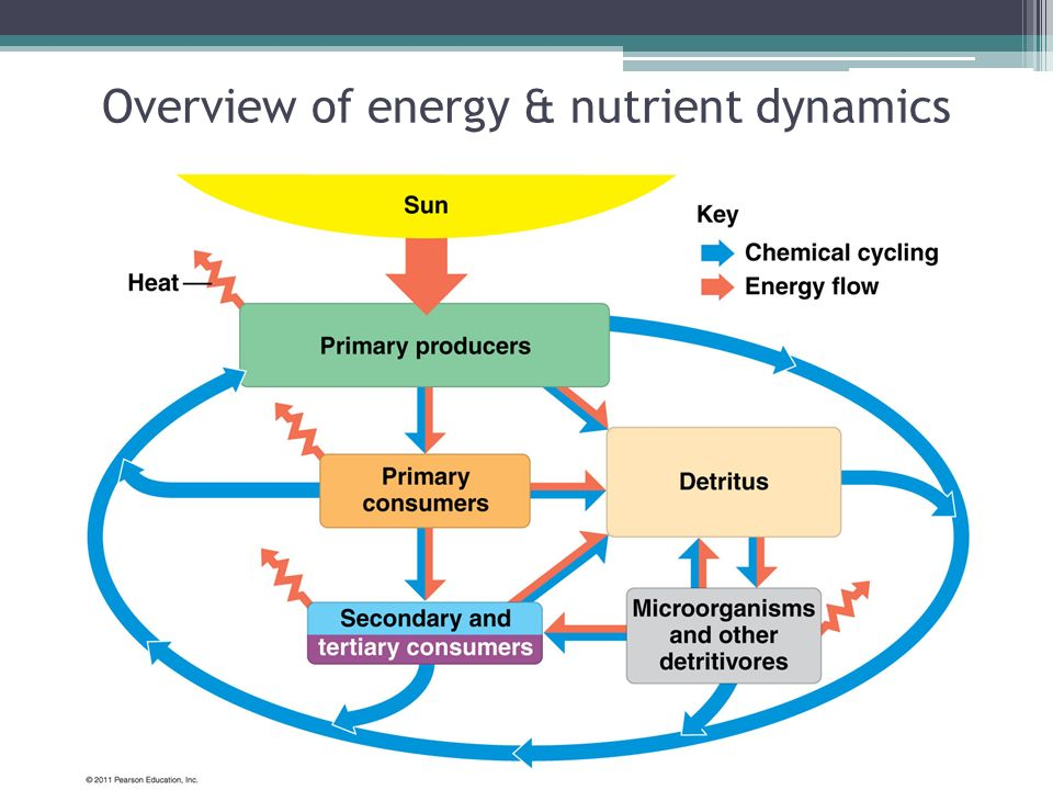 Overview of energy & nutrient dynamics