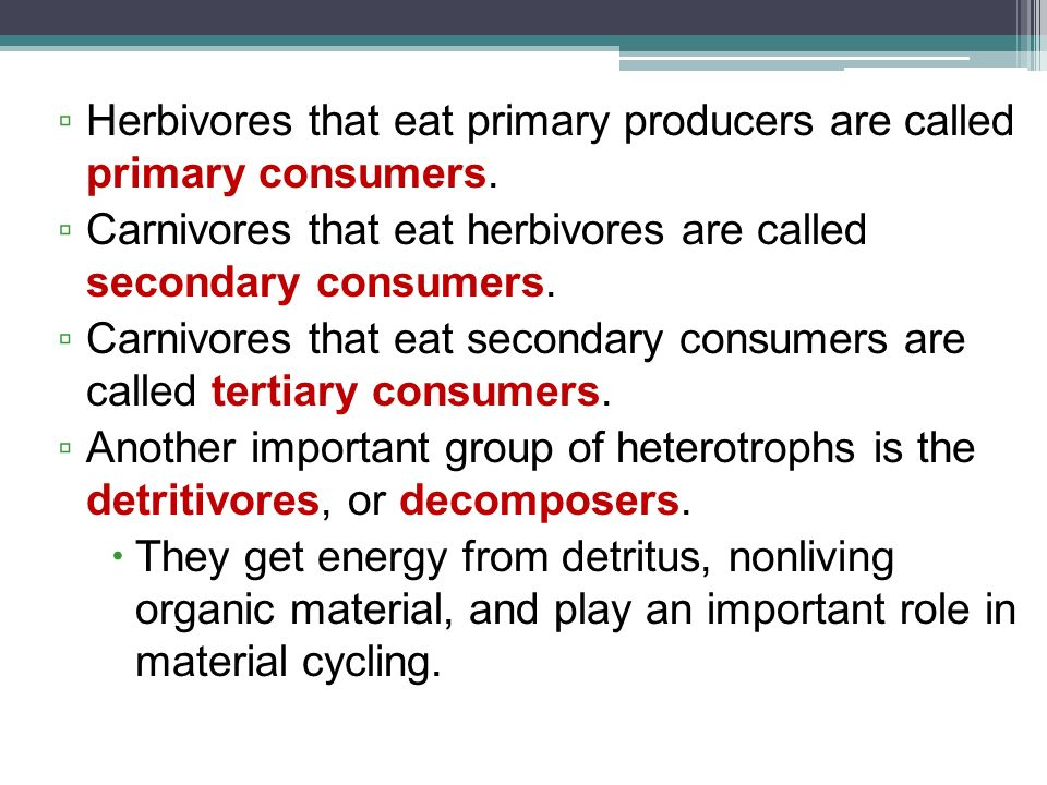 Herbivores that eat primary producers are called primary consumers.