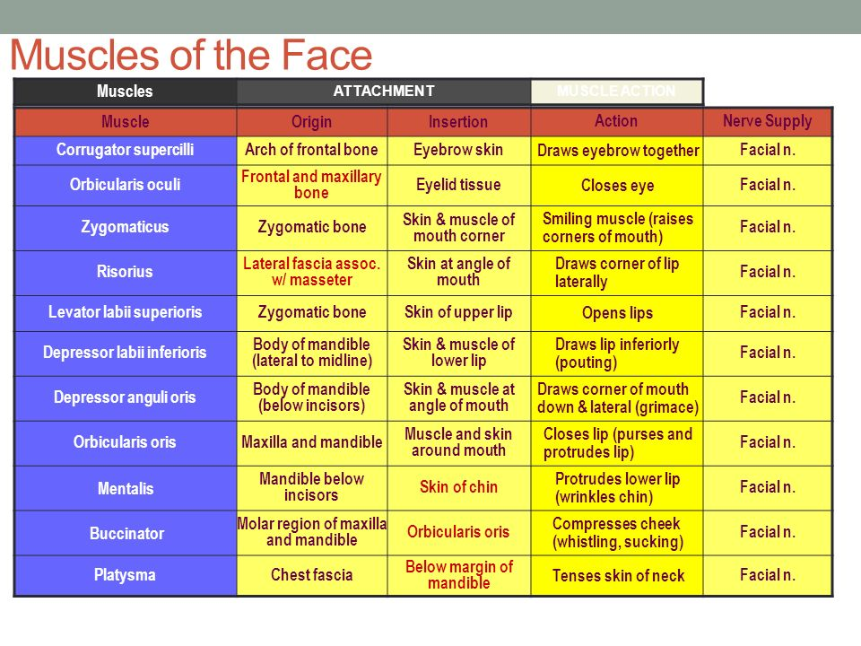 Of facial muscles innervation