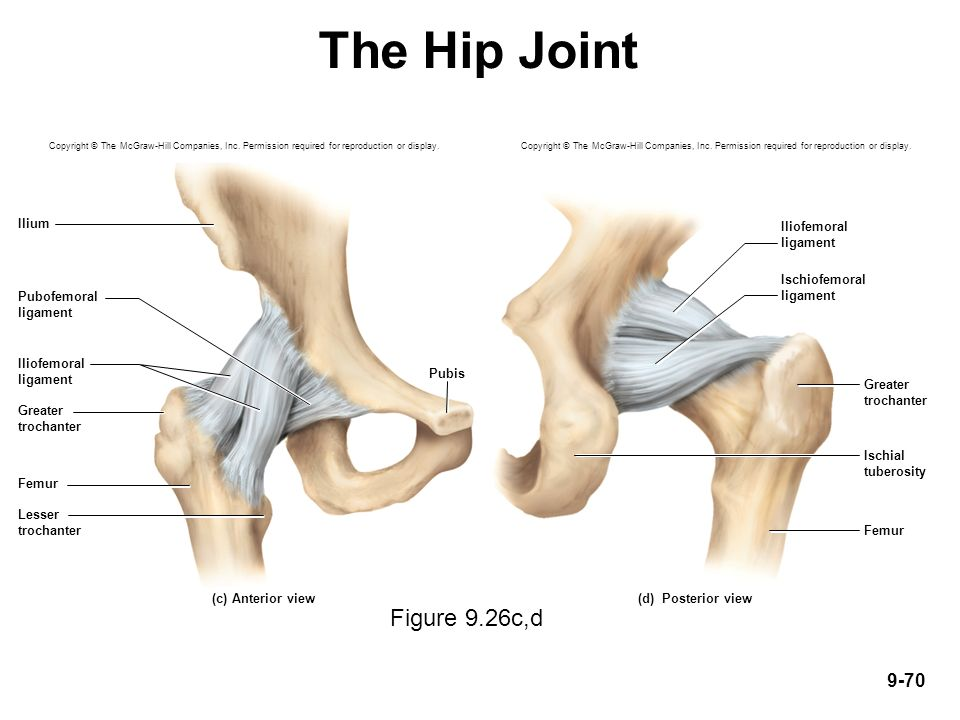 Hip Joint Ligaments