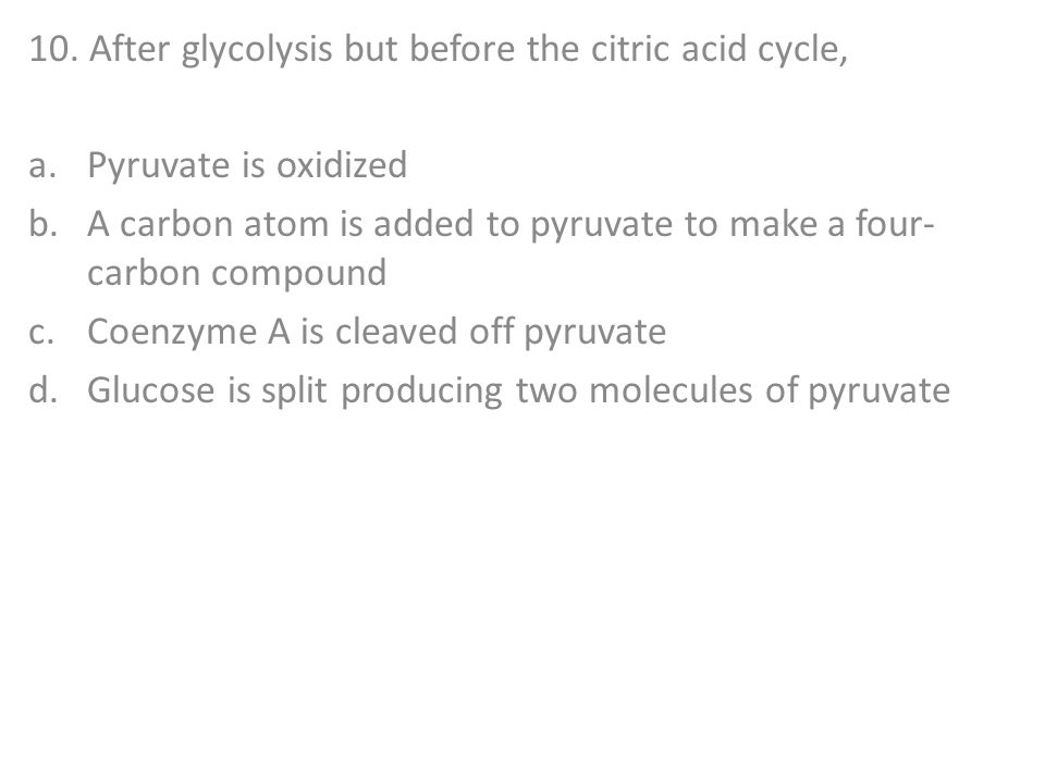10. After glycolysis but before the citric acid cycle,