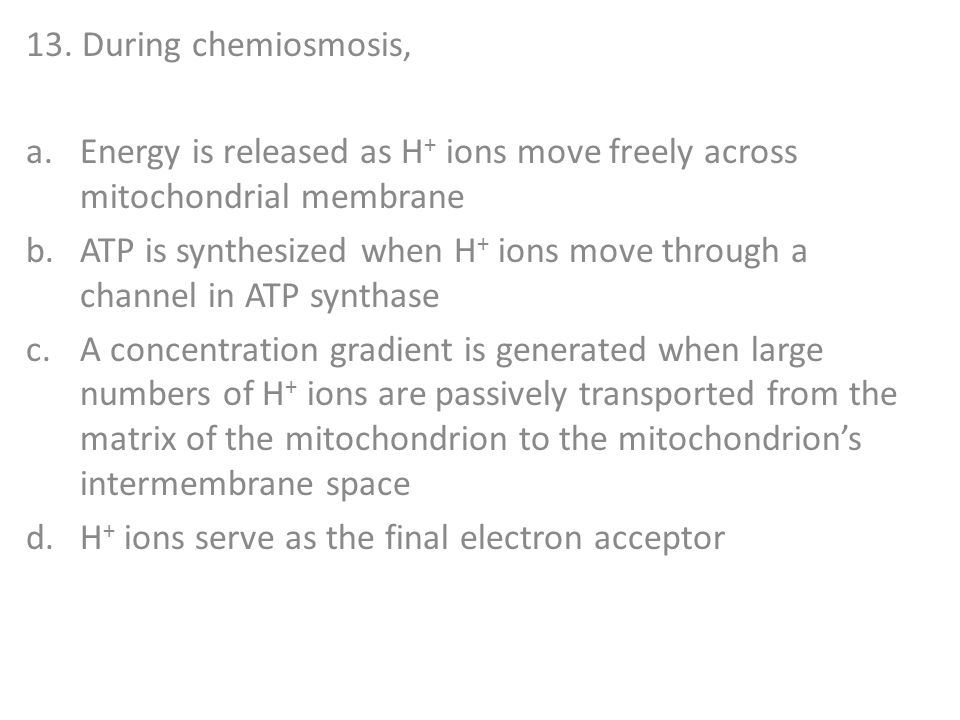 13. During chemiosmosis, Energy is released as H+ ions move freely across mitochondrial membrane.