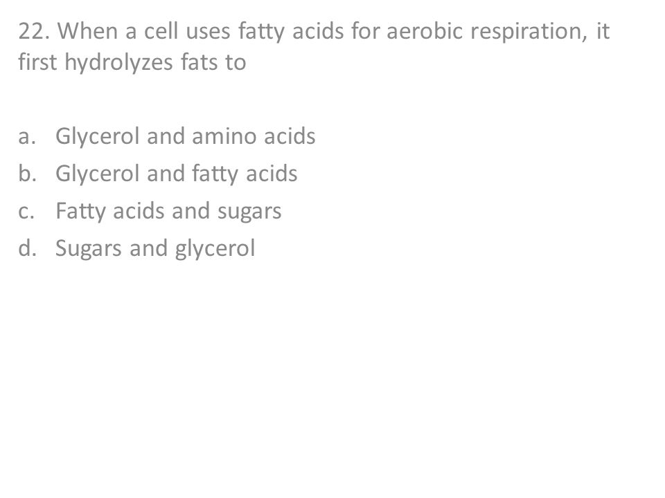 22. When a cell uses fatty acids for aerobic respiration, it first hydrolyzes fats to