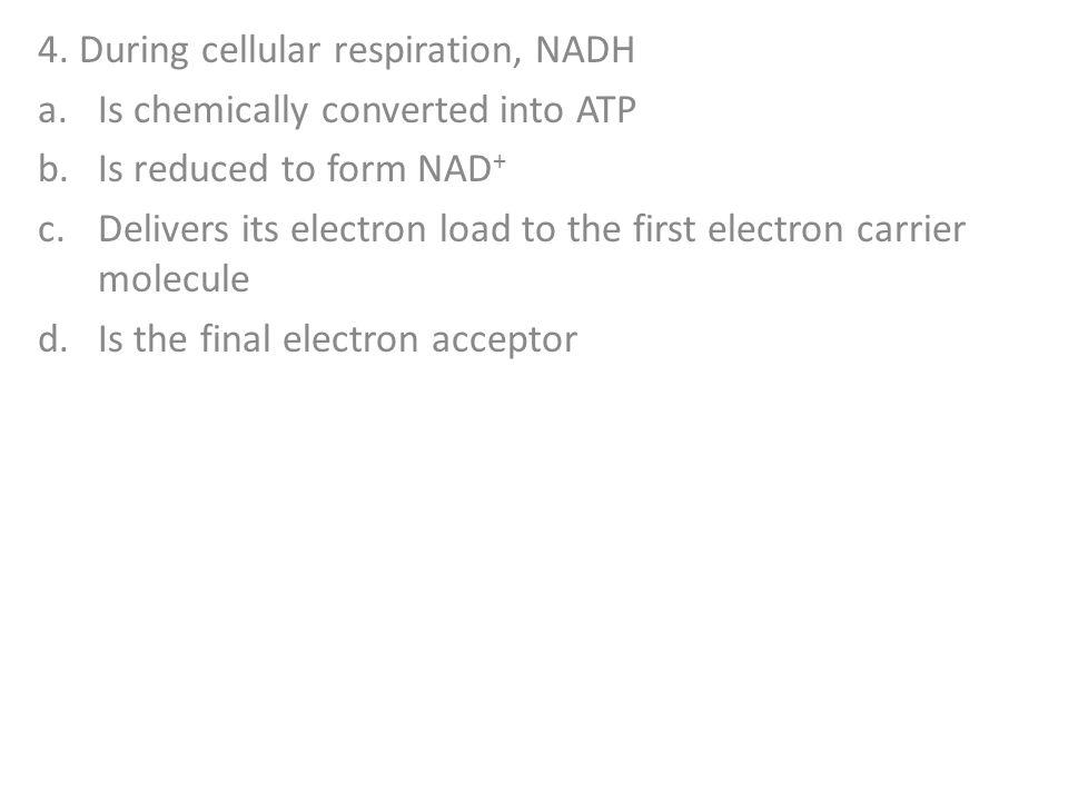 4. During cellular respiration, NADH