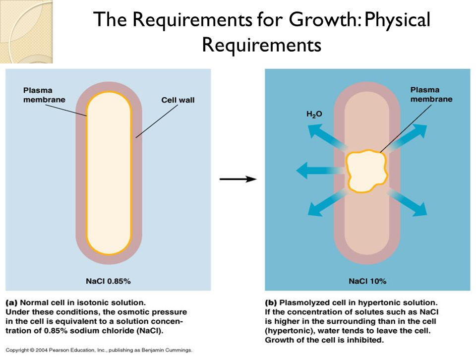 breaking down growth hypotonics essay Human growth hormone, hgh, gh human growth hormone, hgh, gh gh also triggers the release of the insulin-like growth factor-i and breaking down fats.