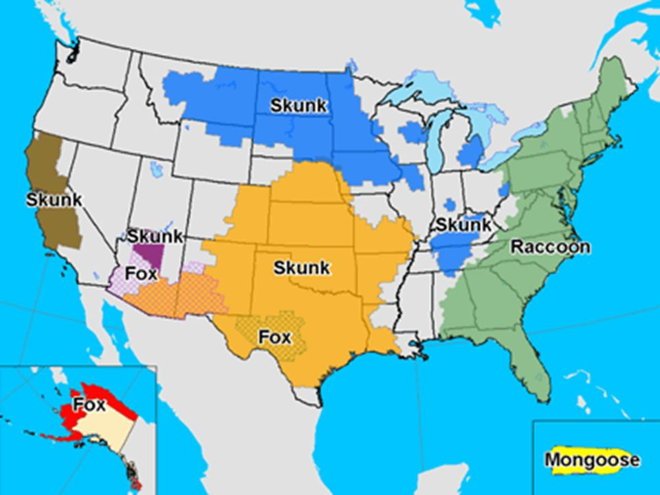 Epidemiology Of The Rabies Virus Ppt Video Online Download - Map of rate of rabies in the us