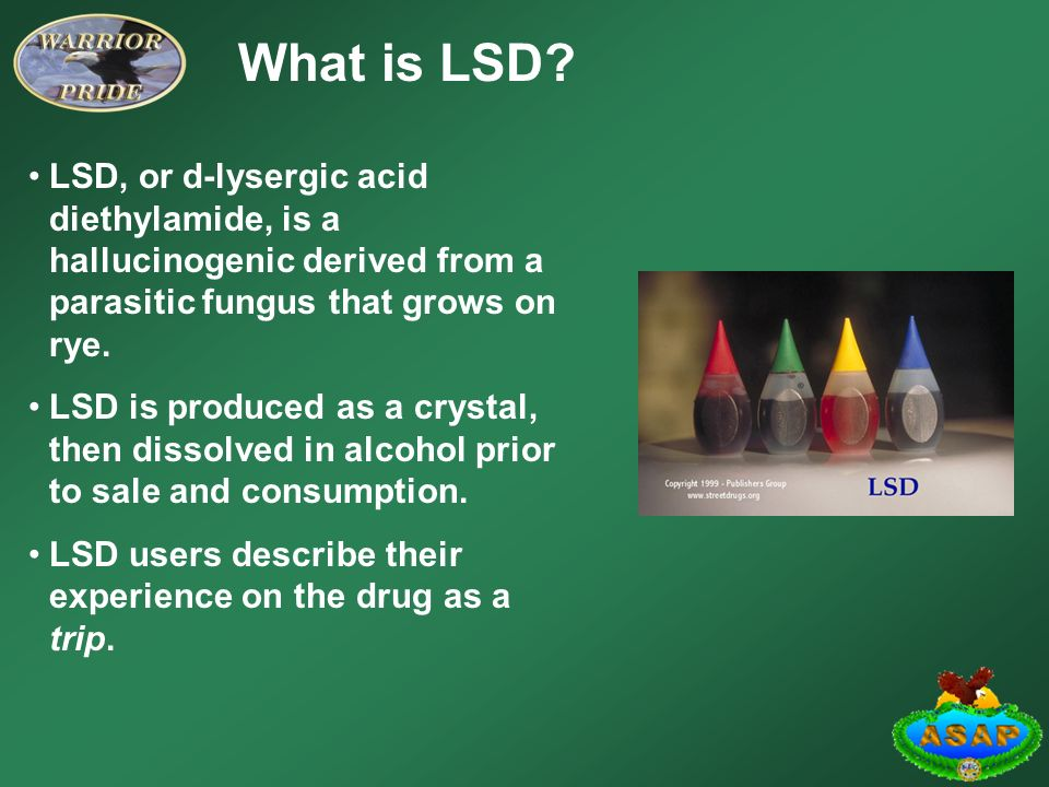 a study of lysergic acid diethylamide lsd or the hallucination drug Lsd is a hallucinogenic street drug formally known as 'lysergic acid diethylamide' it's manufactured using ergot , which is a fungus that naturally grows on certain grains, such as rye lsd is .