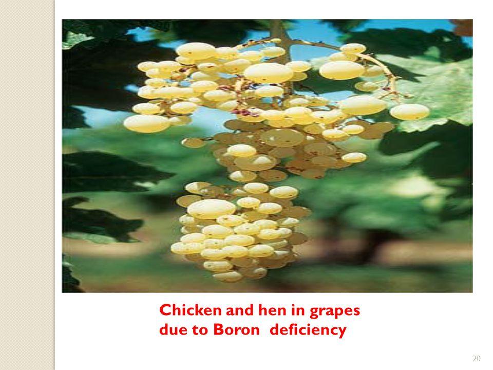 boron uses in plants