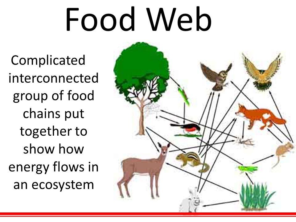 Consumer Science Organism