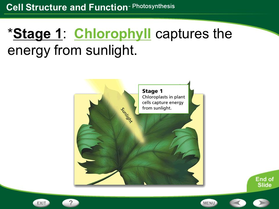 Table of Contents Discovering Cells Looking Inside Cells - ppt ...