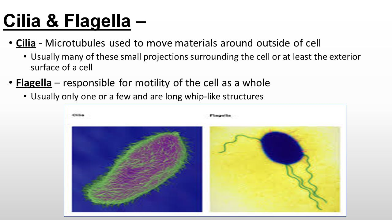 Cells & Tissues Chapter 3 – Part I Cell Organelles - ppt ...