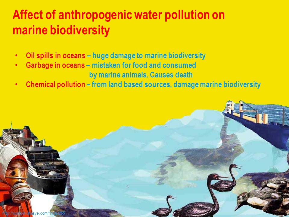 a discussion on water pollution and major pollutants Human rights vis-à-vis great lakes pollution  and as a result the great lakes have accumulated pollutants and  since the great lakes water quality.