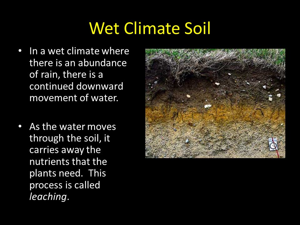 Soil ppt video online download for What is rich soil called