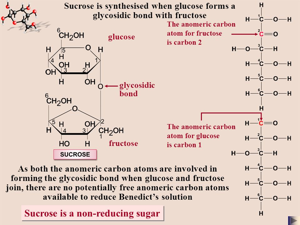 sucrose synthesis Sucrose is a common, naturally occurring carbohydrate found in many plants and plant parts saccharose is an obsolete name for sugars in general, especially sucrose[4] the molecule is a disaccharide combination of the monosaccharides glucose and fructose with the formula c12h22o11.