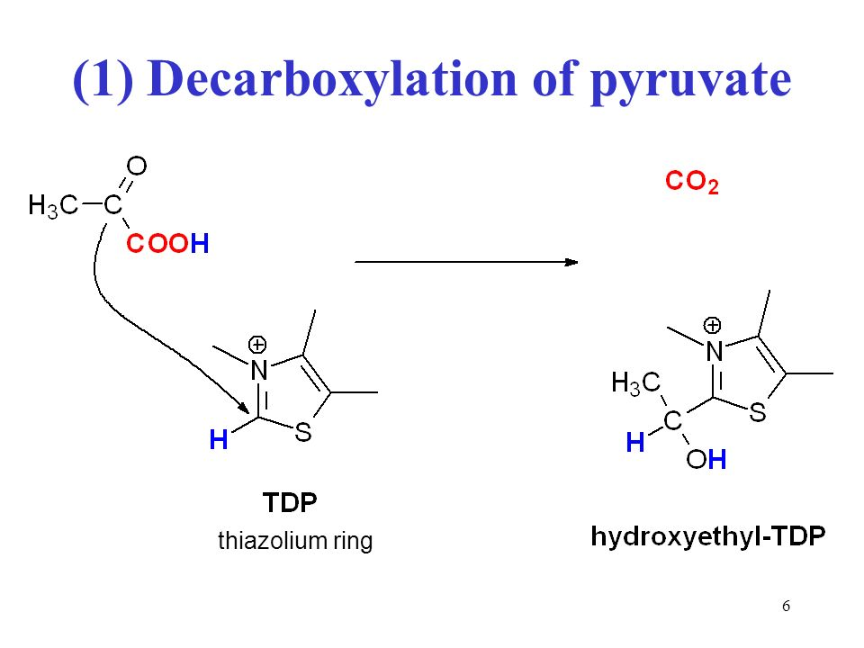 Pyruvate decarboxylase PDC encoded by pdc is a thiamine pyrophosphate TPPcontaining enzyme responsible for the conversion of pyruvate to acetaldehyde in many mesophilic organismsHowever no pdcPDC homolog has yet been found in fully sequenced genomes and proteomes of hyperthermophilesThe only PDC activity reported in hyperthermophiles was a bifunctional TPP and CoAdependent