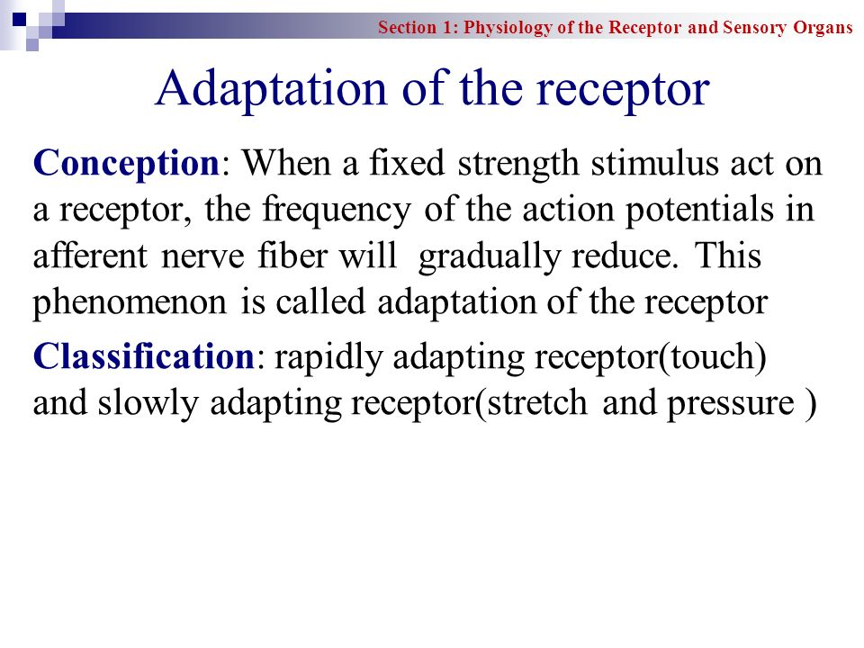Adaptation of the receptor
