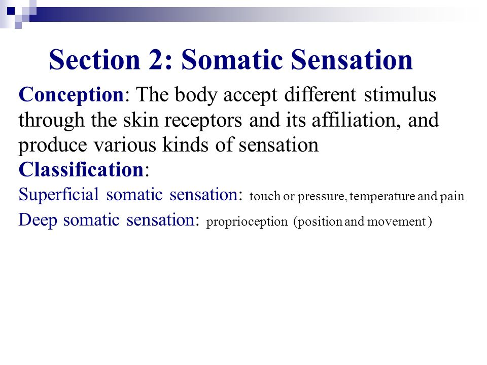 Section 2: Somatic Sensation