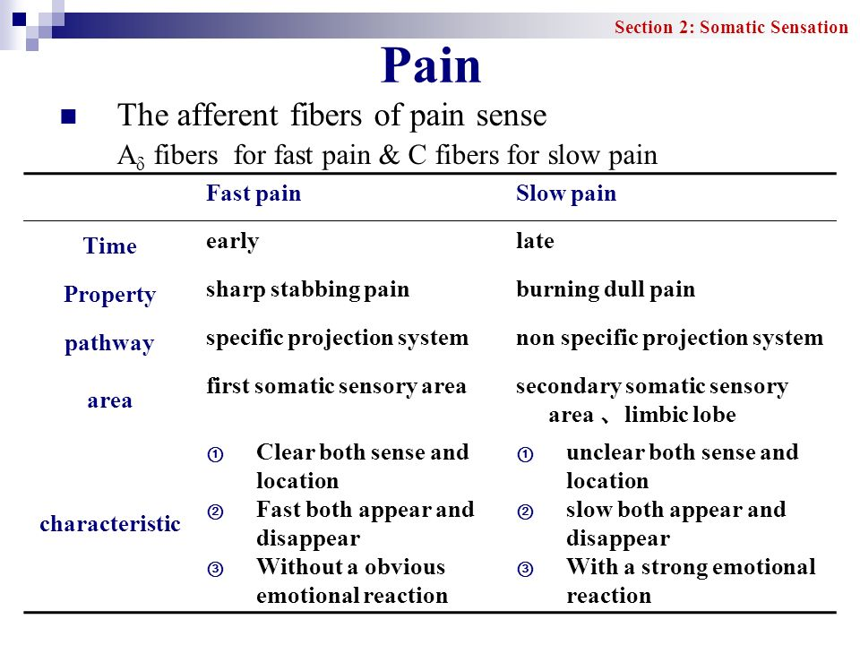 Pain The afferent fibers of pain sense
