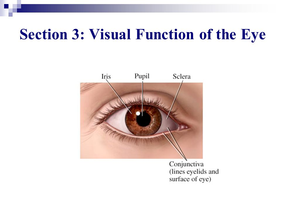 Section 3: Visual Function of the Eye