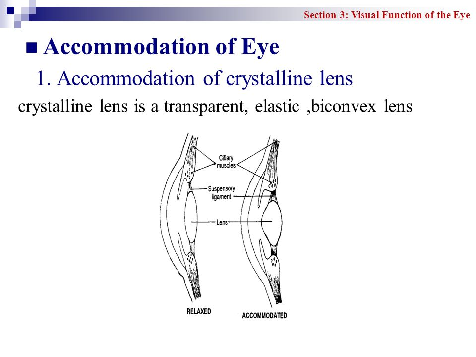 Accommodation of Eye 1. Accommodation of crystalline lens