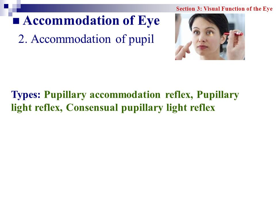 Accommodation of Eye 2. Accommodation of pupil