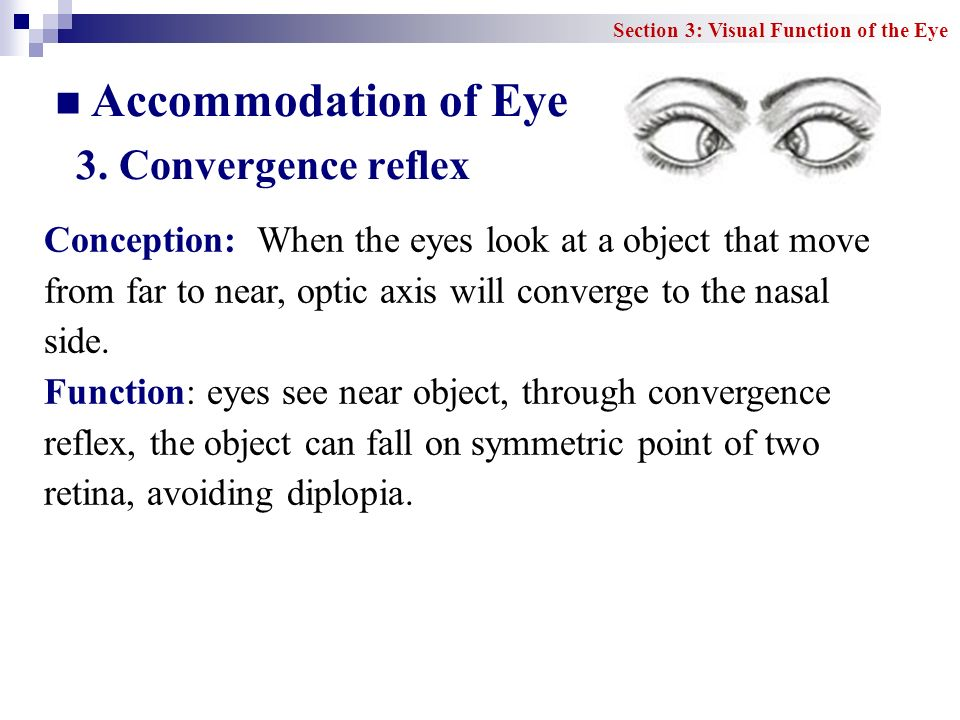 Accommodation of Eye 3. Convergence reflex