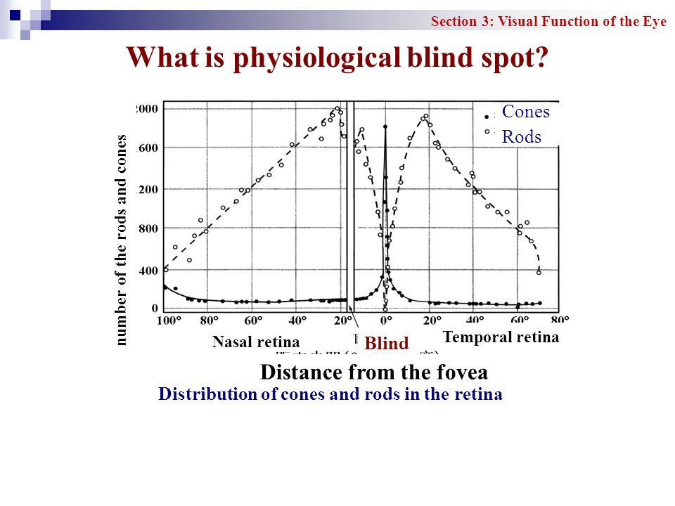 What is physiological blind spot