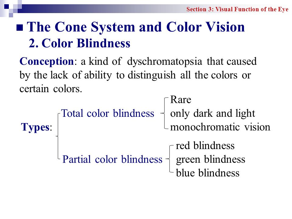 The Cone System and Color Vision