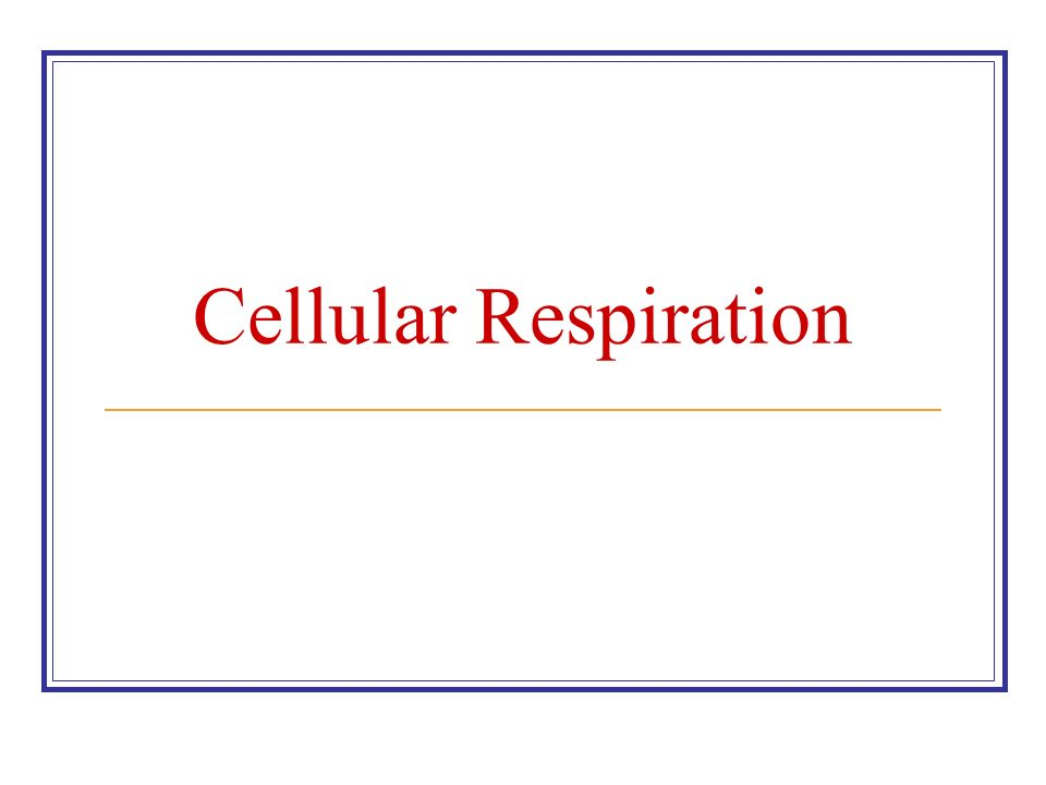 Cellular Respiration  Ppt Video Online Download. Real Estate Broker Website Design. Zithromax Allergic Reaction Remote Rsccd Org. Full Bed Dimensions In Feet Bath Tub Walk In. Medical Facts On Abortion Life Insurance Exam. Ceiling Fan Alternative Ping Monitor Software. Most Professional Websites Lemon Law New Car. Cartao De Credito Credicard What Is A Risk. Dentist Columbus Indiana Back Pain Lying Down