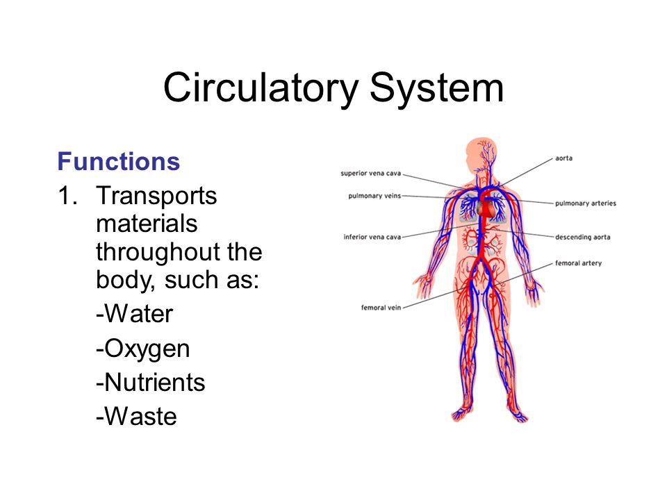 body functions