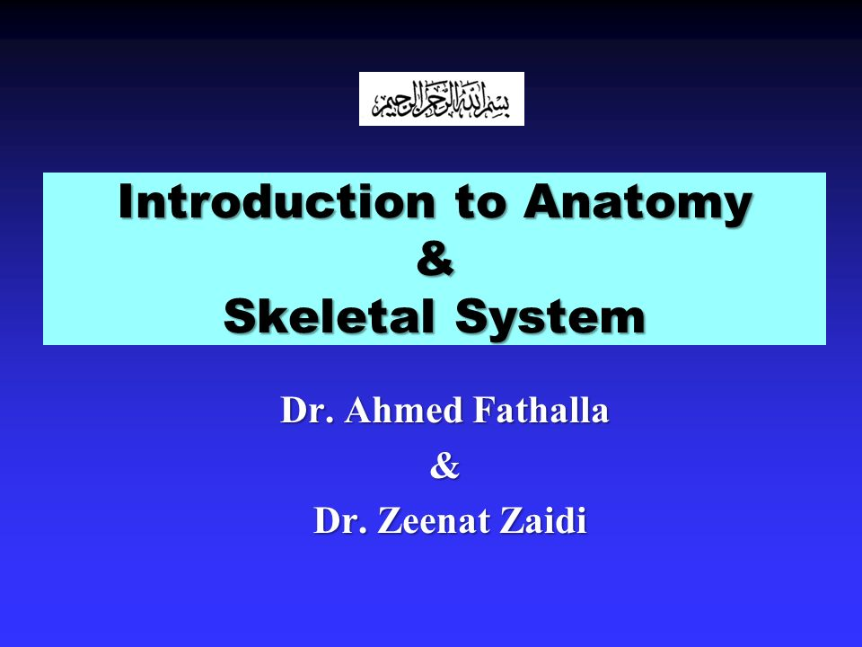 Introduction to Anatomy & Skeletal System - ppt video online download