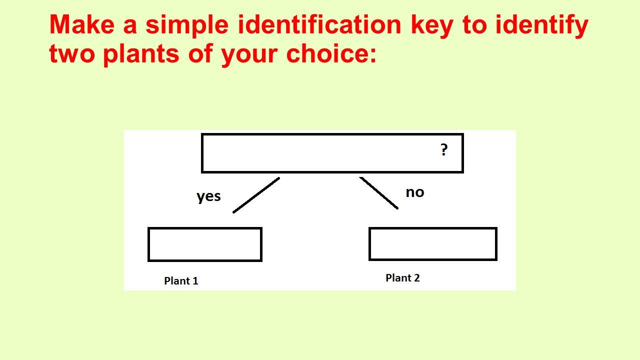 Identification keys 3 Science Grade ppt video online download