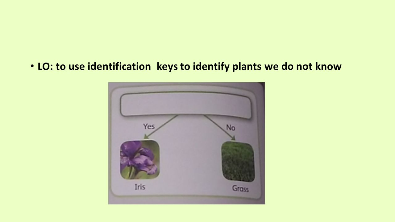 Identification keys 3 science grade ppt video online download for What do we use trees for