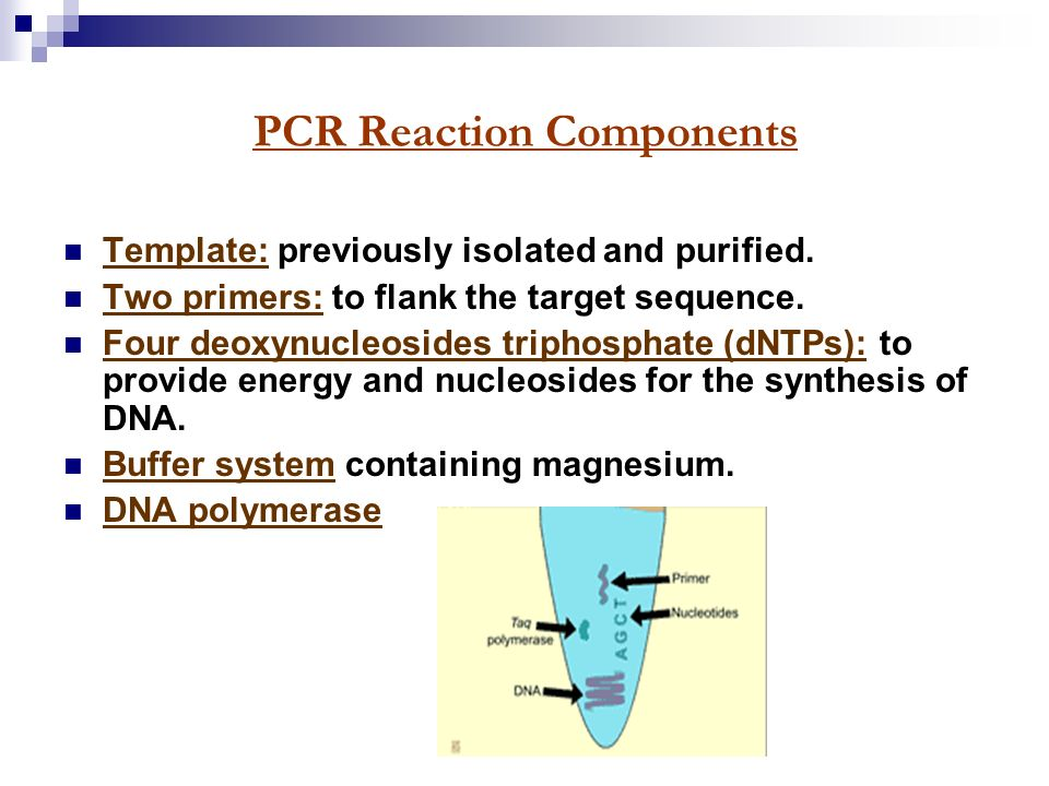 2013 polymerase chain reaction shakira sulehri ppt for Pcr template amount