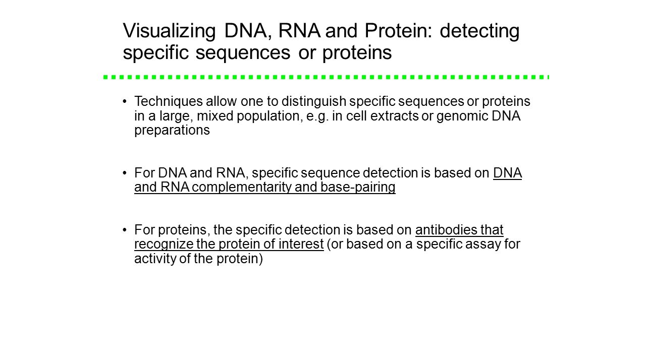how to detect a specific protein
