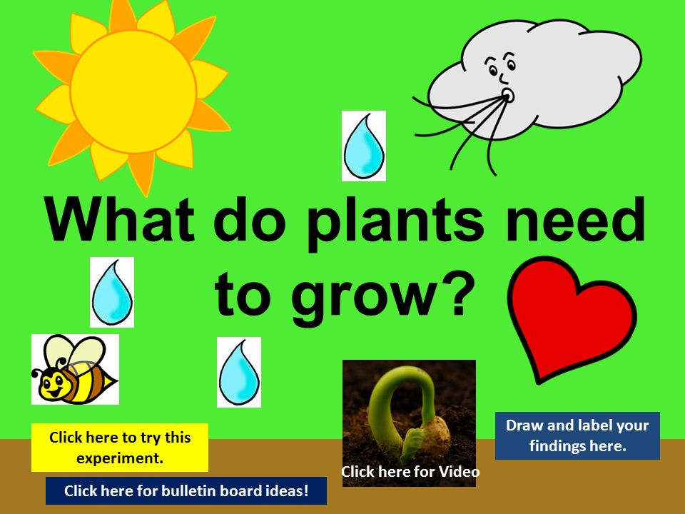 What Do I Need To Plant A Garden 28 Images Green