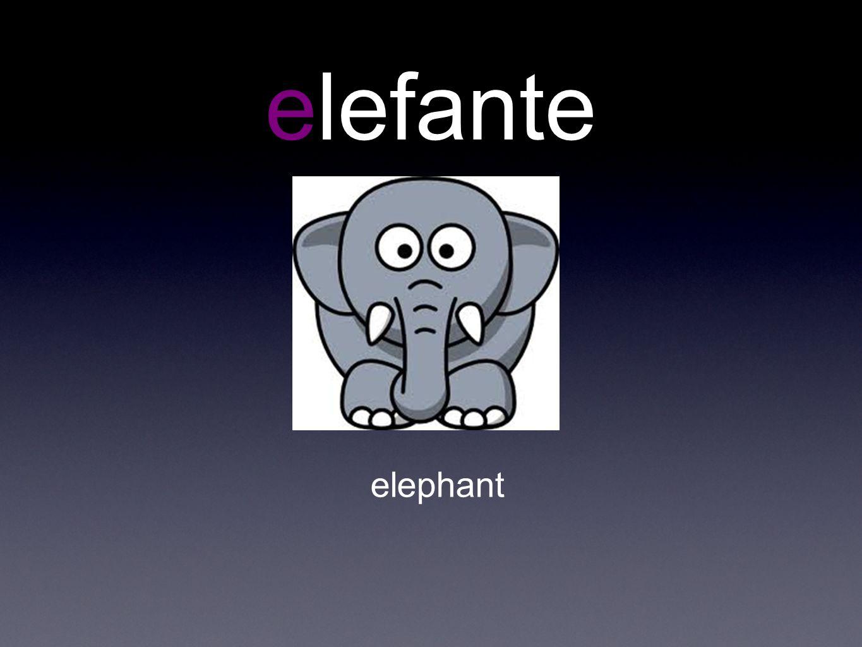 elefante elephant