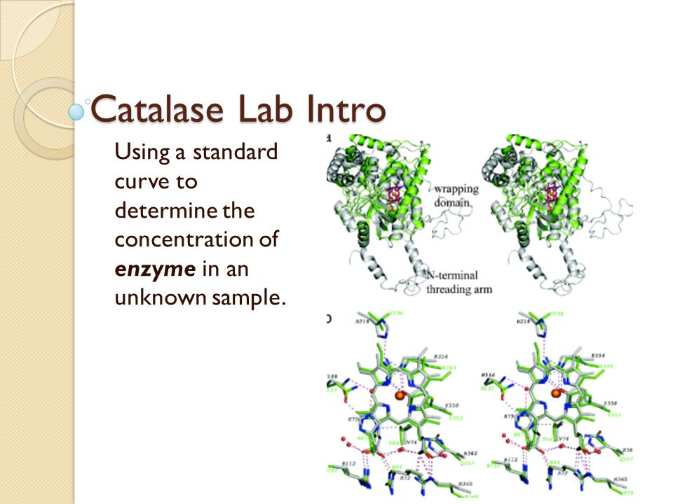 enzyme assays definition Enzyme assays - definition definition: methods used to measure the relative activity of a specific enzyme or its concentration in solutiontypically an enzyme substrate is added to a buffer.
