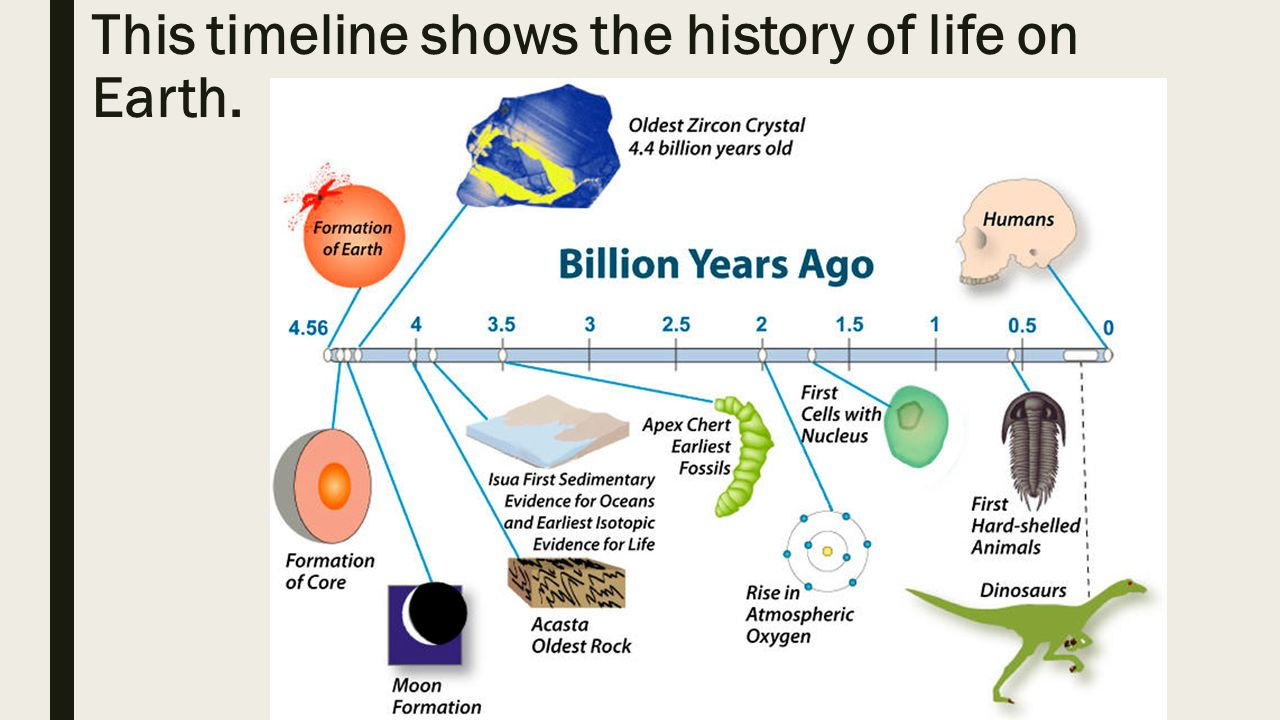 evolution of life on earth essay As a result of man's attempts to solve the riddle of the origin of life on earth, many   the organic evolution (which declares that life evolved from simpler forms to.