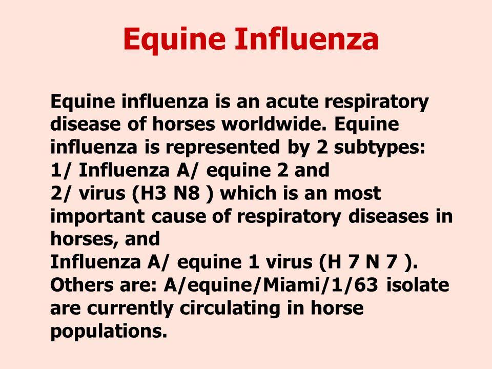Equine influenza virus life cycle