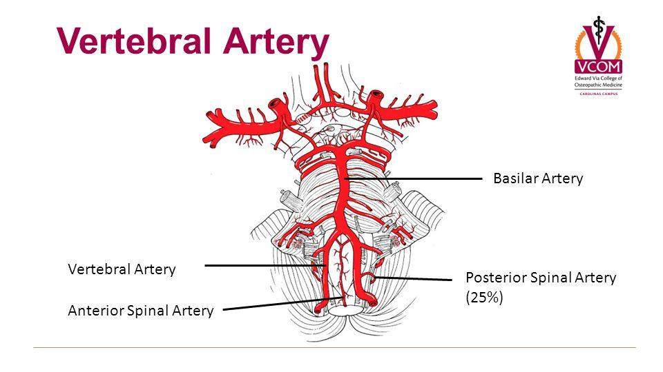 Left Vertebral Artery More Information Kopihijau