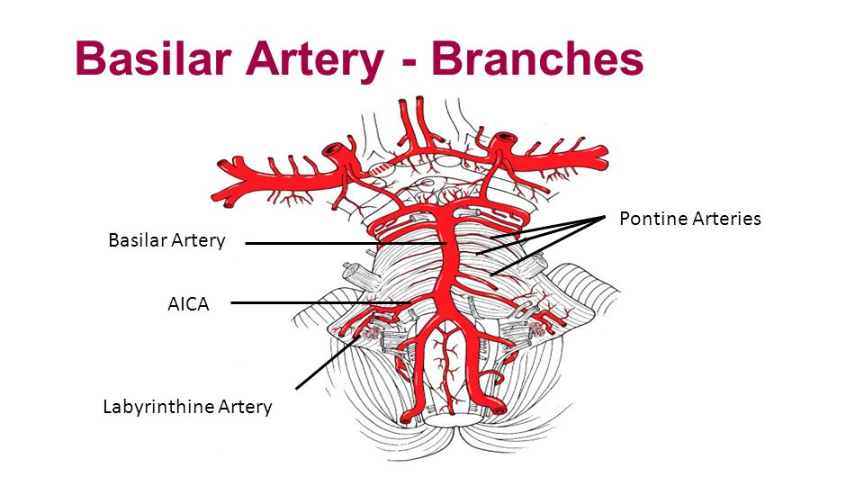 Blood Supply Fall 2012 General Concepts Internal Carotid ... Labyrinthine Artery