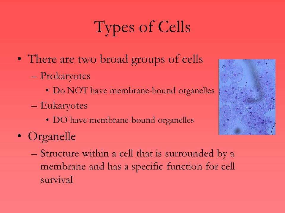 types of cells there are two broad groups of cells organelle - ppt, Human Body