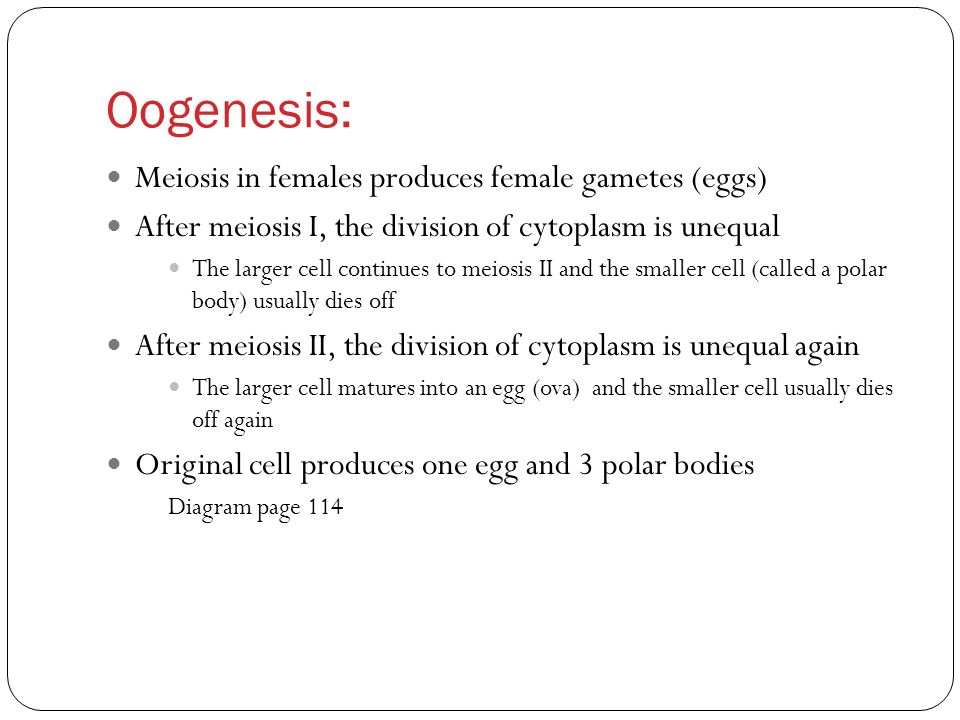 Comparing Mitosis and Meiosis (and gametogenesis) - ppt download