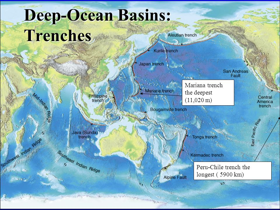 Composition of seawater features of the sea floor ppt video 39 deep ocean basins trenches gumiabroncs Gallery