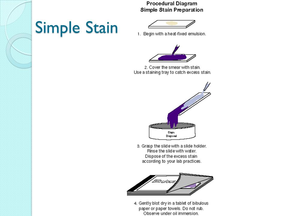 groundwork preparation wet mounts smears and simple stains Place your wet mount preparation on your microscope stage stain the smears as follows: a flood the smears with crystal violet for about 1 min b.