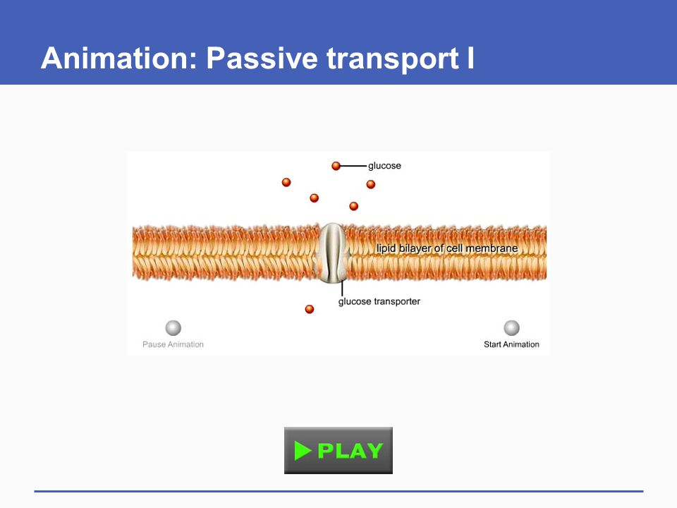 A Closer Look at Cell Membranes - ppt download
