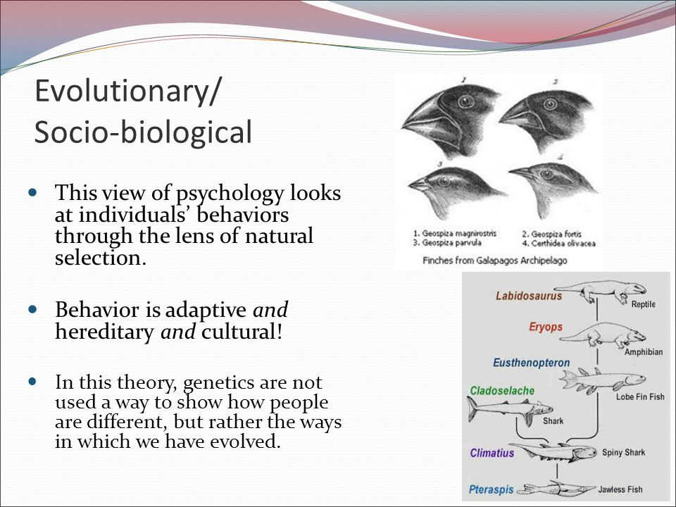 Biological Criminal Behavior