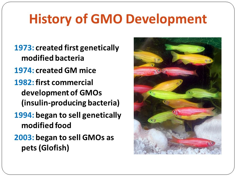 genetically modified organisms in developed and The modified organism is referred to as a 'genetically modified organism'  the  development and use of gene technology throughout australia.
