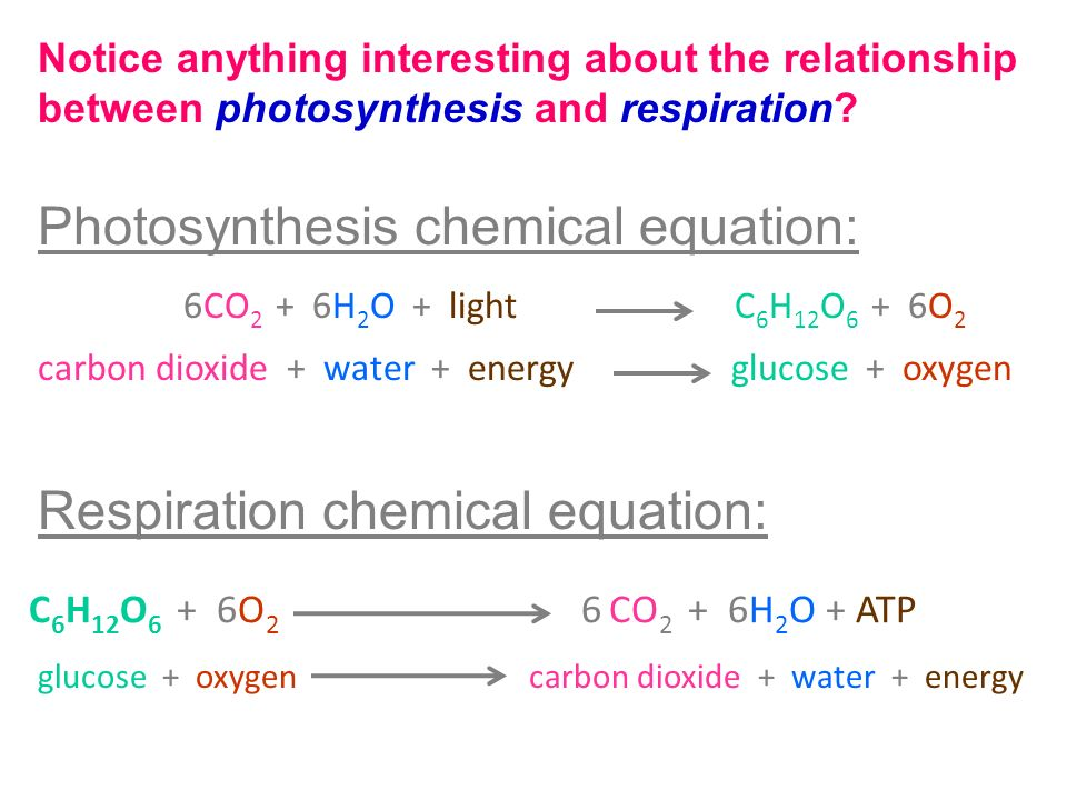 general equation for cellular respiration and photosynthesis relationship